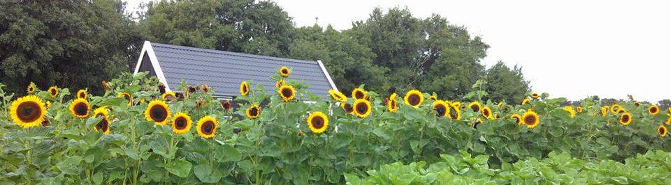 Tuin naast de Branding Schiermonnikoog